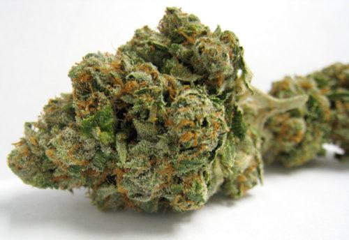 Abusive OG 2 - Misy Canna Shop - Buy Weed Online - Order weed Online - Abusive OG 3