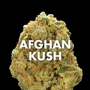 Afghan Kush - Afghani Kush Strain - CBD - Misty Canna Shop