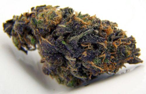 Blackberry Kush - Misty Canna Shop - Blackberry Kush Marijuana Strain