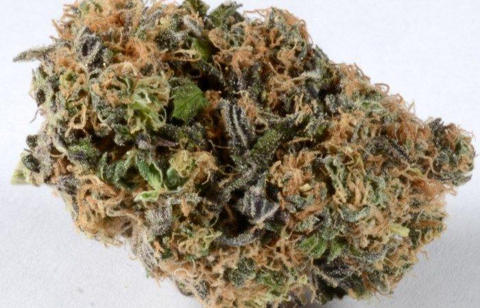 Blueberry Marijuana - Misty Canna Shop - Blueberry aka Berry Blue Weed Strain