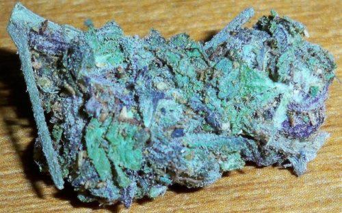 Blue Dream - Misty Canna Shop - Blue Dream Strain - Blue Dream Marijuana