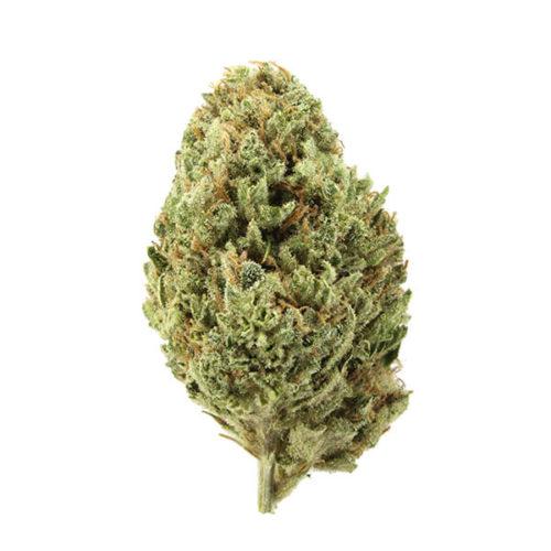 Ghost Train Haze Strain - Misty Canna Shop - 420 Weed - Mail Order