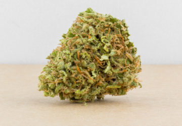 Cheese - Misty Canna Shop - Cheese Strain - Cheese CBD - Cheese Marijuana