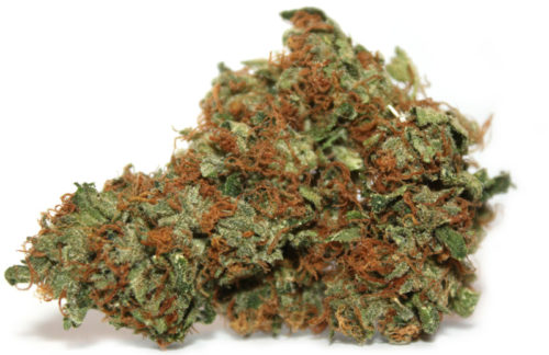 Chemdawg - Misty Canna Shop - Chemdawg Strain - Kush for Sale