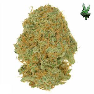 1-ounce-cinderella-99-(Hybrid)
