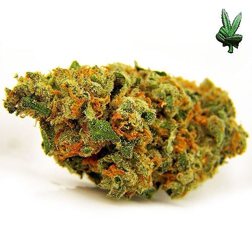 1-ounce-jack-herer-(Sativa)