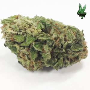 1-ounce-lemon-thai-(Sativa)
