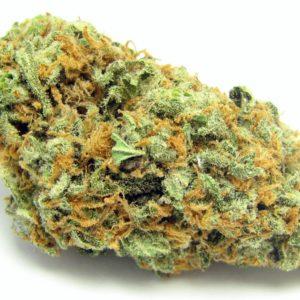green-crack–greenhouse