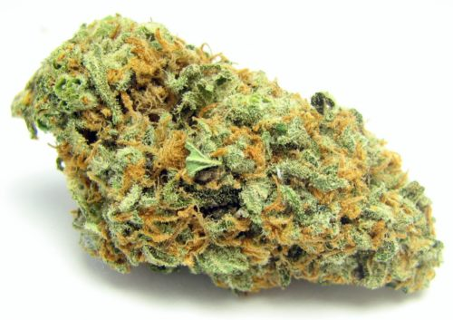 green-crack–greenhouse