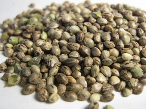 Regular Cannabis Seeds Mix Pack - Misty Canna Shop