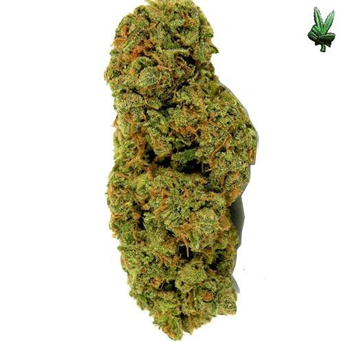 Tickle Kush (Hybrid) | Tickle Kush Seeds | Tickle Kush Strain