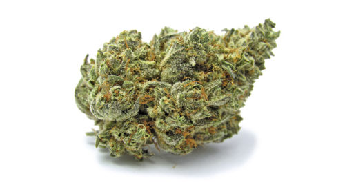 white-buffalo–greenhouse